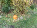 Halloween party_64