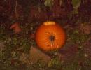 Halloween party_69