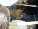hajk2007_185