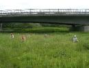 hajk2007_34